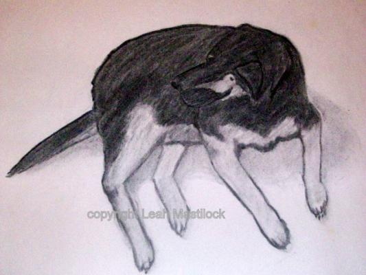 Rotweiler German Shepherd Dog charcoal drawing by L.E. Mastilock